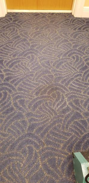 Dry Commercial Carpet Cleaning in Fort Lauderdale, FL (4)
