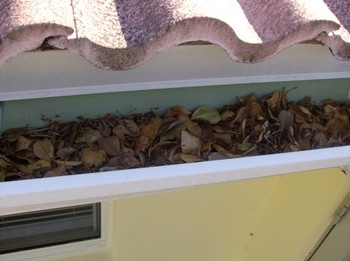 Before Gutter Cleaning in Fort Lauderdale, FL